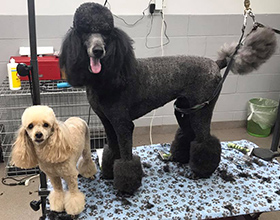 Groomed Dogs